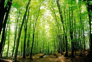 美人林のページ